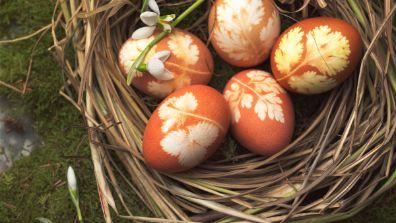Petit nid d'œufs de Pâques colorés et ornés de motifs d'herbes