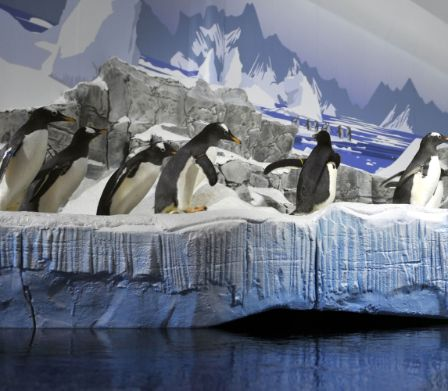 Pinguine an Land