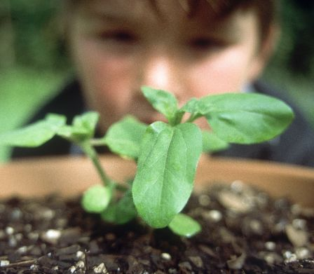 Enfant regardant des plantes germant dans un pot
