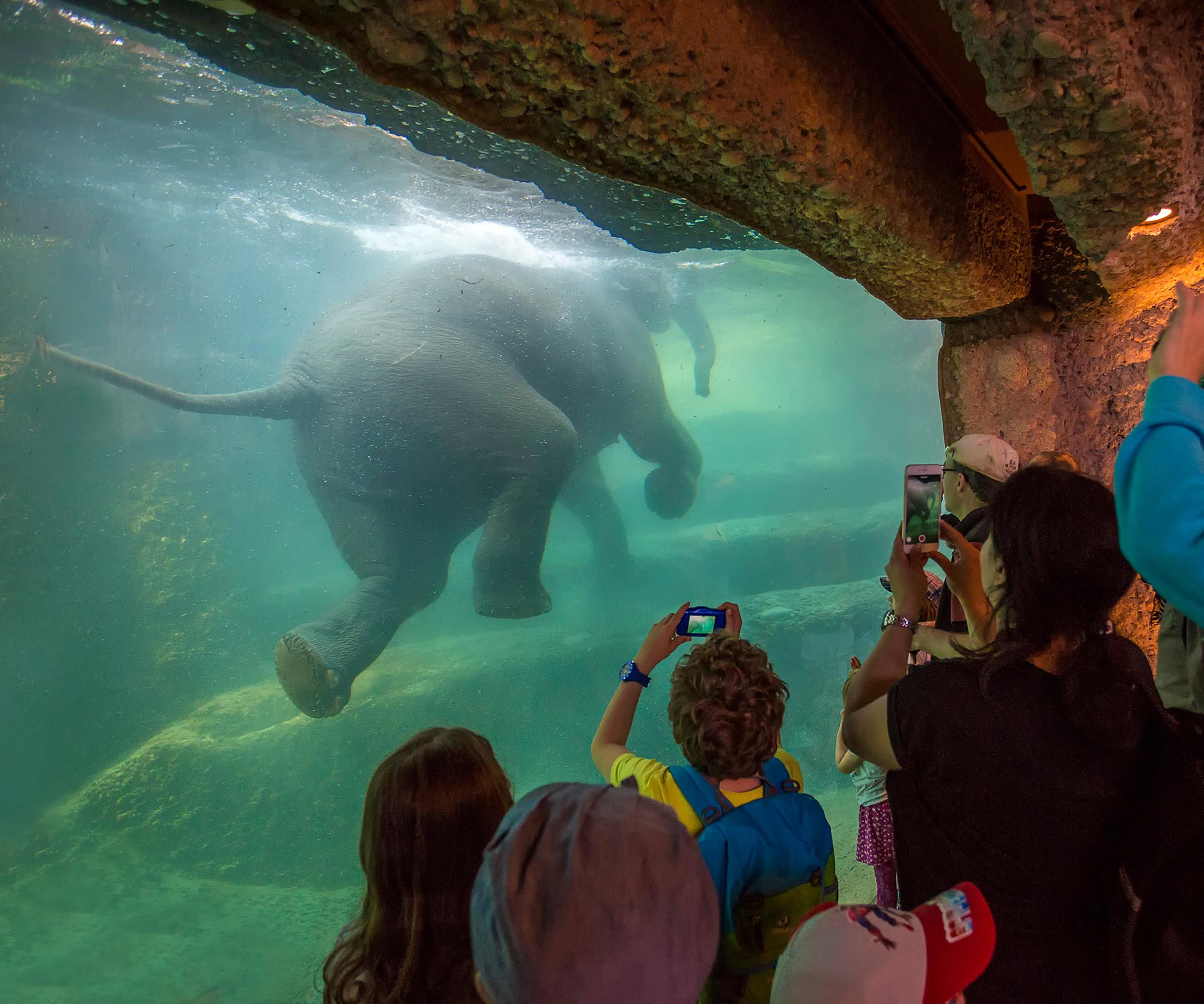 Familienerlebnis Im Zoo Zurich Famigros