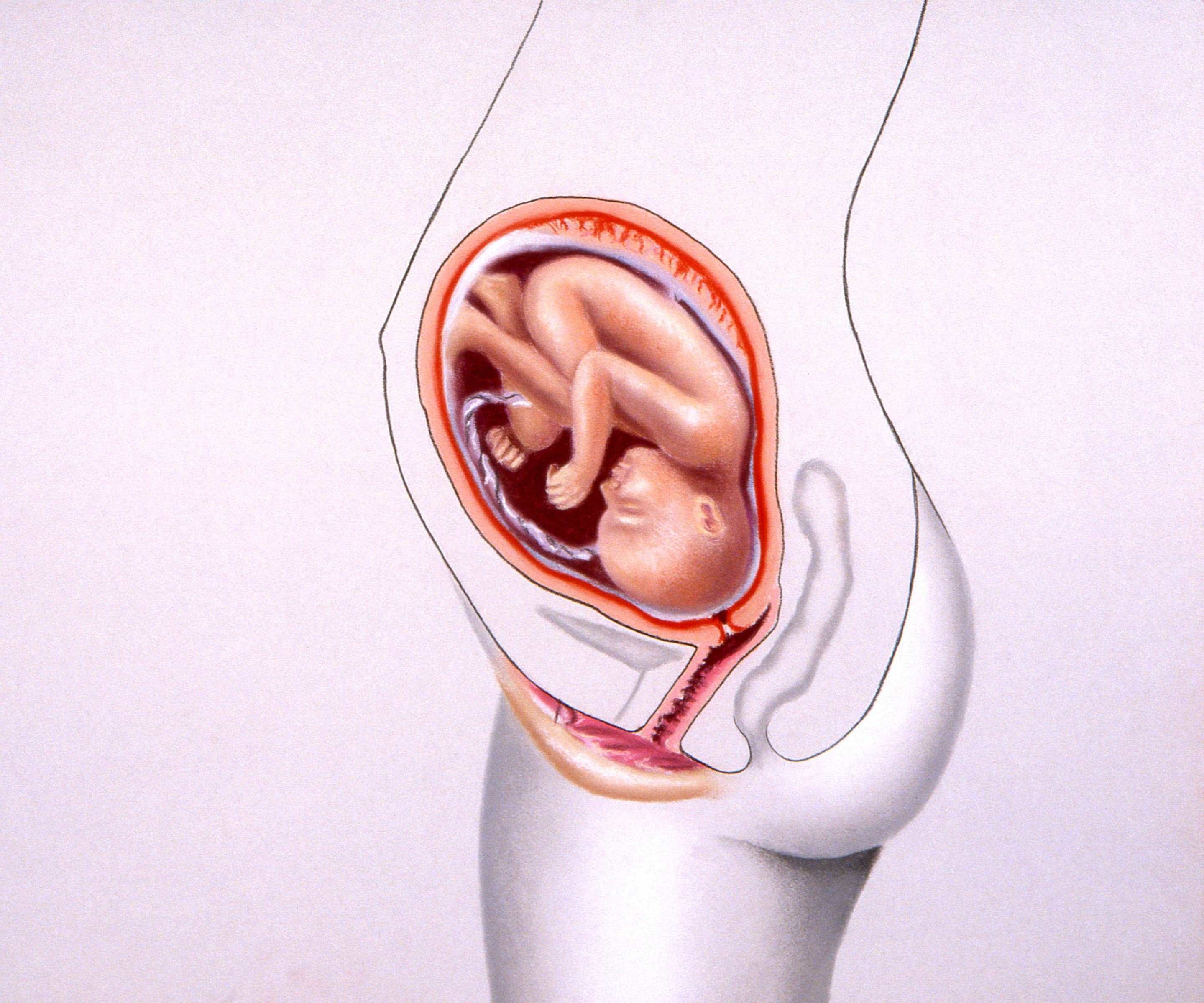 Ertasten gebärmutter schwangerschaft Fundusstand Schwangerschaft: